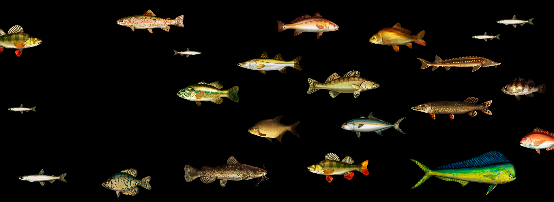 ひとつのソナーですべての魚を釣り上げろ!Deeperと釣ろう!
