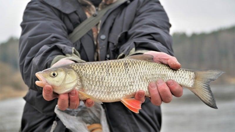 Pirmosios žūklės su fideriu upėse – kaip surasti žuvį ir pasidžiaugti nuošalumu