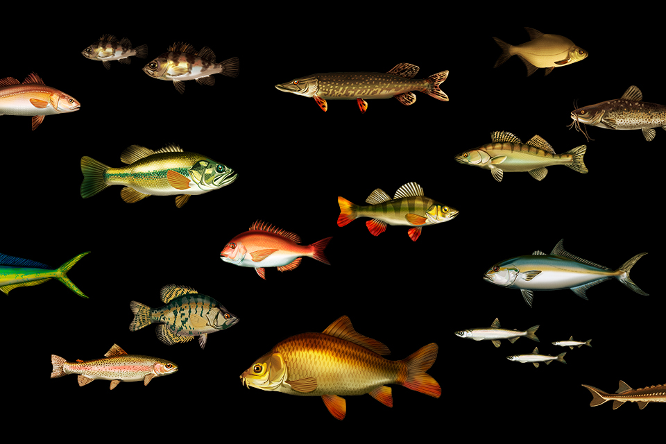 Deeperひとつでいろいろな魚を釣り上げろ