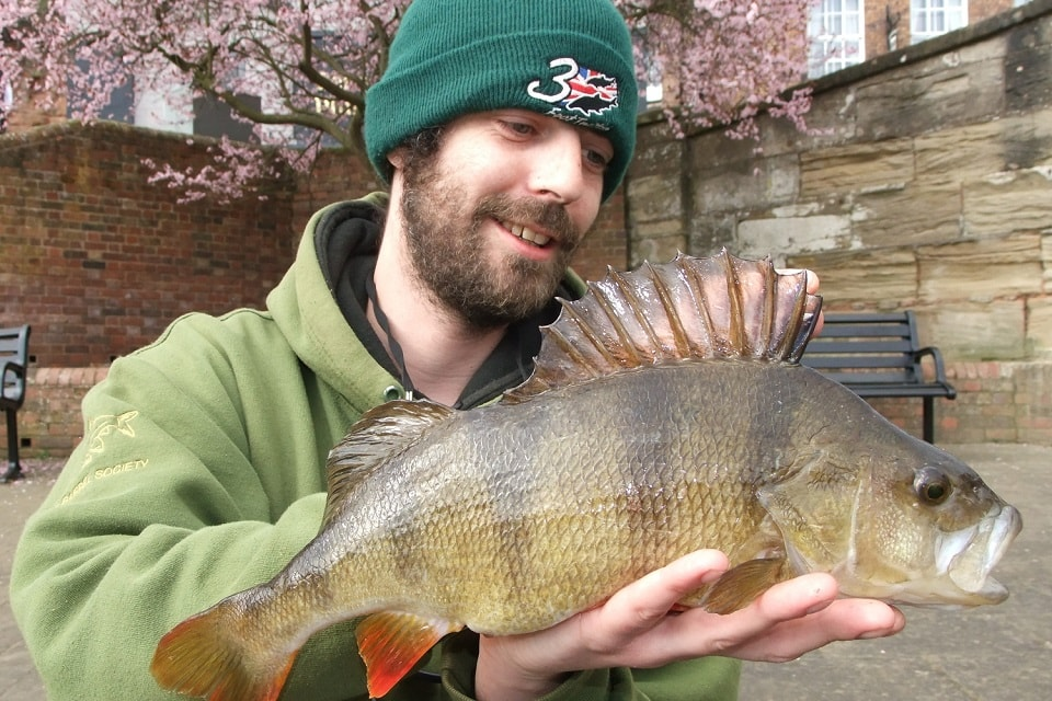 Perch fishing tips