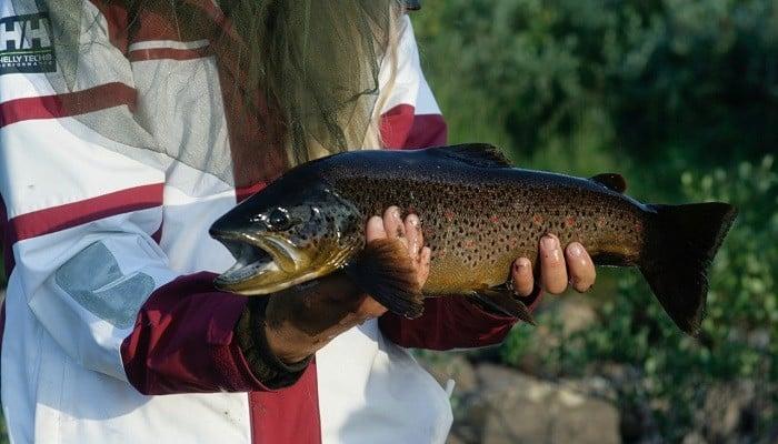 Fiskesesongen i Finnmark