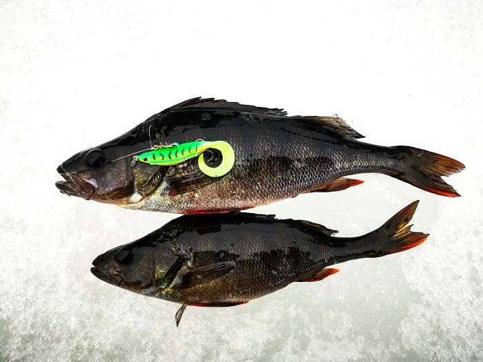 kala jäällä